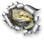 A4 Size Ripped Torn Metal Design With Bearded Dragon Motif External Vinyl Car Sticker 300x210mm